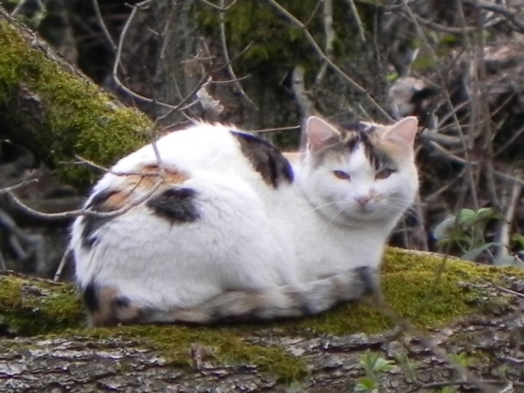 Chat le havre